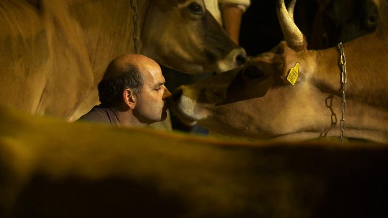 Koeien zonder antibiotica