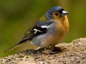 Leuk kleurig vogeltje