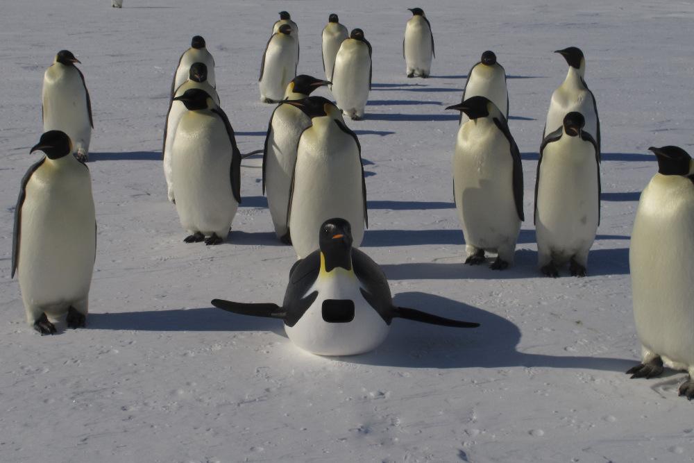 Penguins Undercover