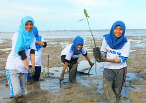 wahli_plant_mangrove