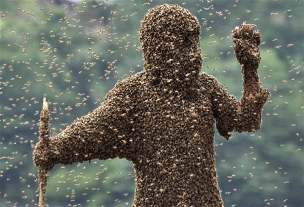 bijen-aantrekken
