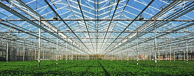Glastuinbouw_620