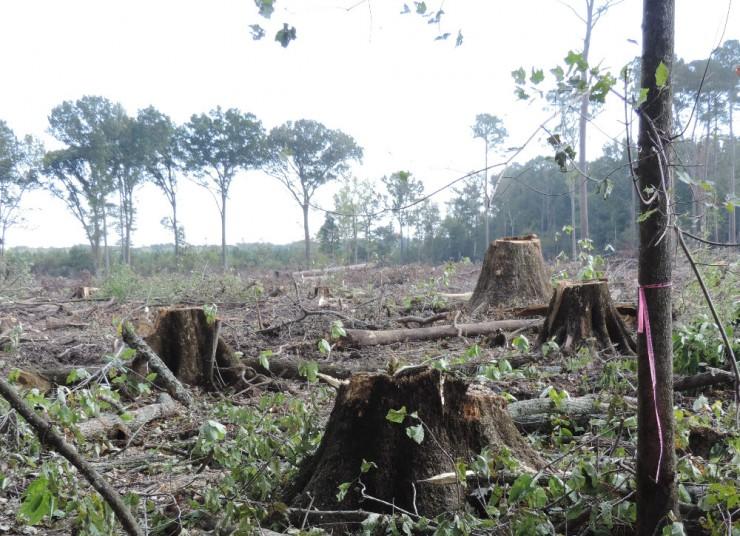 Amerikaanse bossen gekapt voor houtpellets