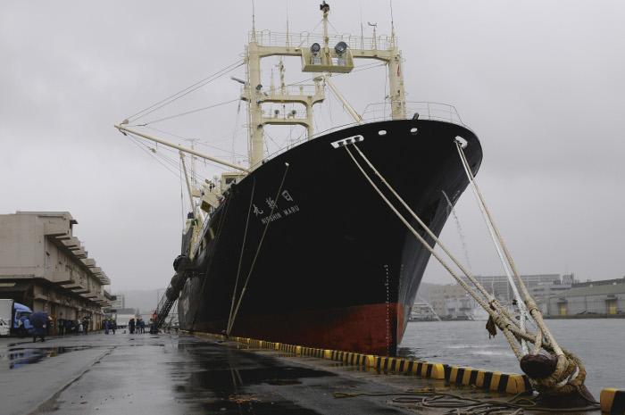 Het schip Nisshin Maru na terugkomst van de walvisvaart, in de haven van Shimonoseki, Japan. Beeld: Greenpeace