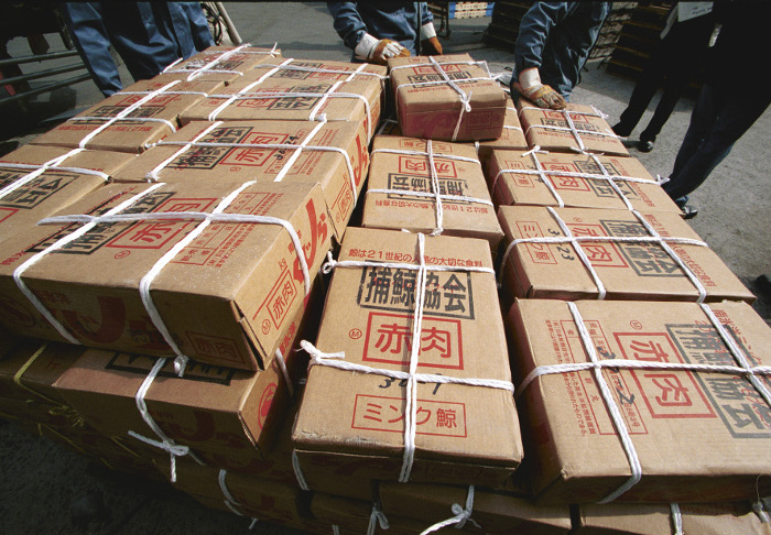 Greenpeace toonde al eens aan dat Japanse pakhuizen vol onverkoopbaar walvisvlees liggen, terwijl handel in walvisvlees niet is toegestaan bij vangst voor wetenschappelijke doeleinden. Beeld: Greenpeace