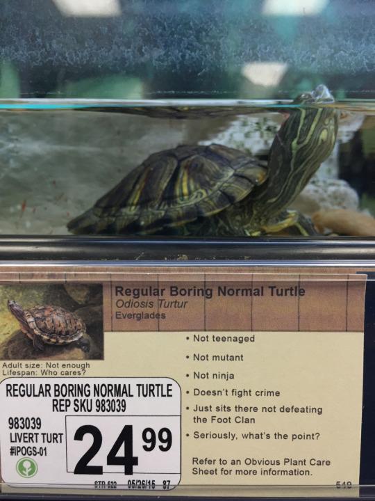 weekupdate regular boring normal turtle slide_429486_5565584_free