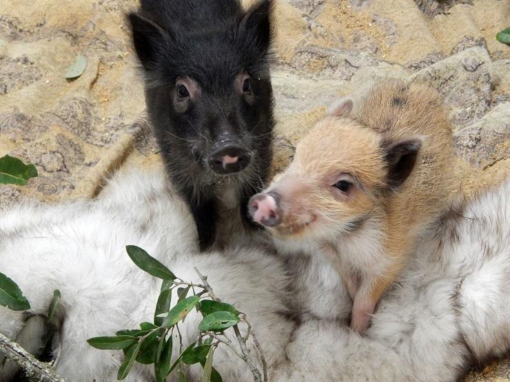born-free-usa-fur-rehabilitation-6
