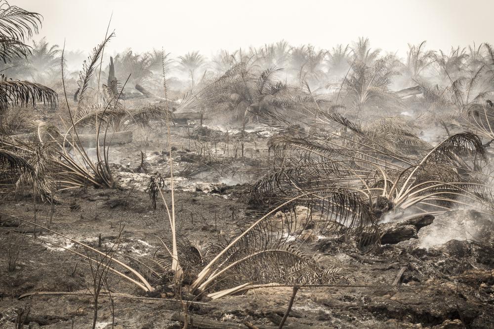 Foro: Victor Barro/Milieudefensie