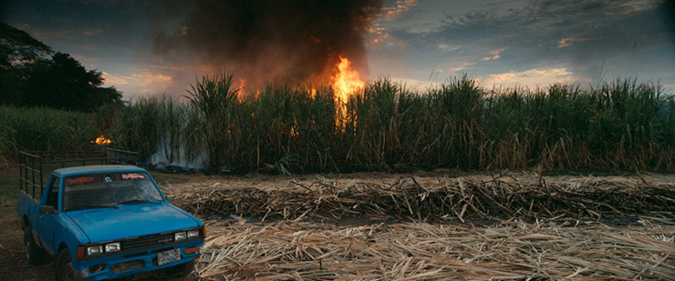 Brandend rietsuikerveld in El Salvador