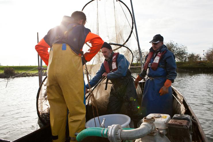 Sinds 2011 mogen de vissers door overheids restricties niet meer op paling vissen. Internationale onderzoeksprojecten zijn nu onderdeel van hun dagelijkse bestaan. - Beeld: Michael Rhebergen