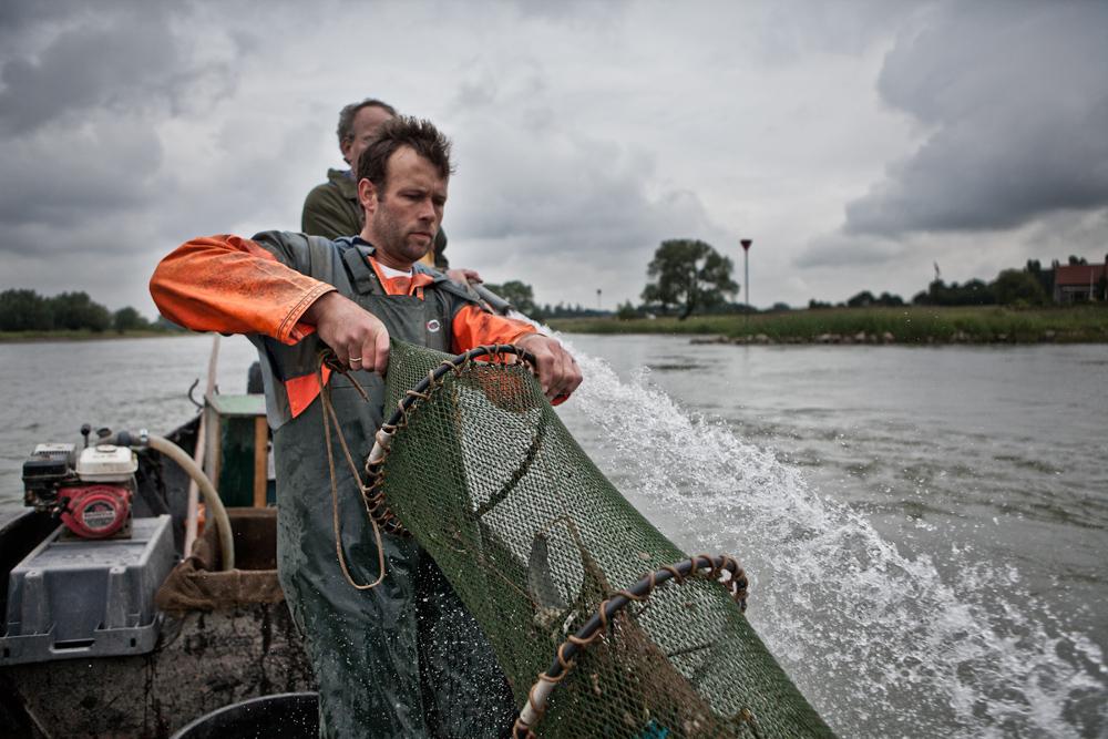 Frans Komen haalt een visnet omhoog in de IJssel. Deze visnetten zijn uitgezet voor onderzoeks doeleinden. Sinds 2011 mogen de vissers door overheids restricties niet meer op paling vissen. Internationale onderzoeksprojecten zijn nu onderdeel van hun dagelijkse bestaan.
