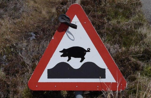 Varkens stoten ammoniak uit. Beeld: Anthony O'Neil Wikimedia CC SA BY