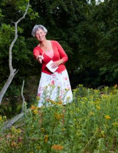 Tellen helpt: Mariek Mansveld telt al 26 jaar vlinders