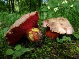 bospaddenstoelen